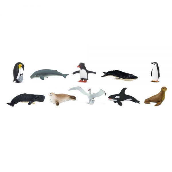 חיות אנטארקטיקה