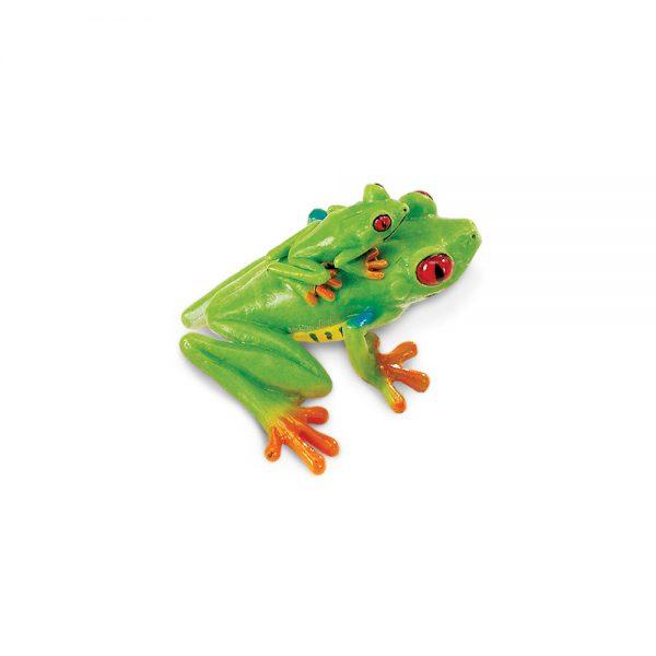 צפרדע עץ אדום עיניים