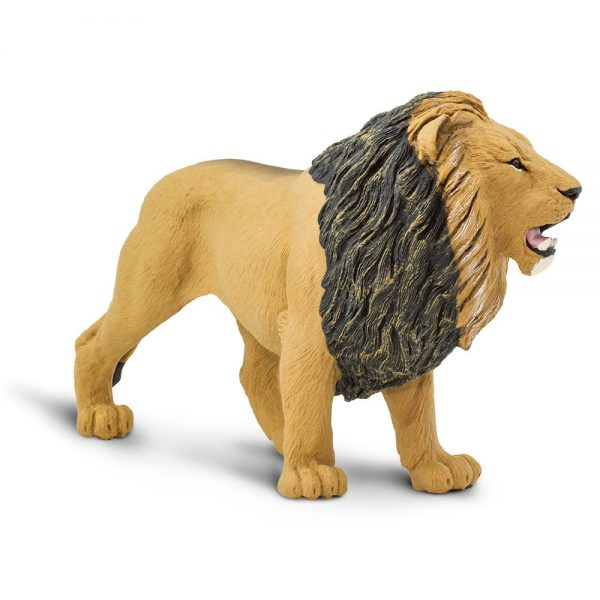 אריה הסדרה הגדולה