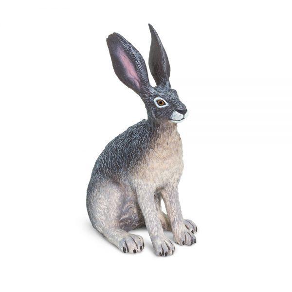 ארנבת שחורת-זנב