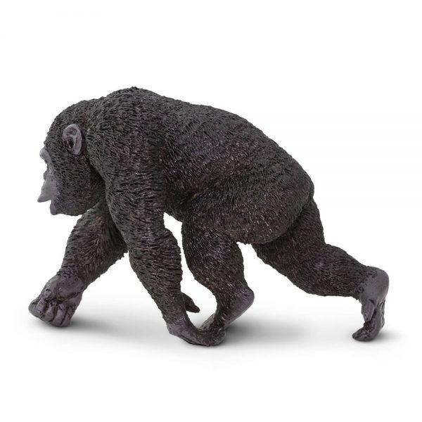 שימפנזה