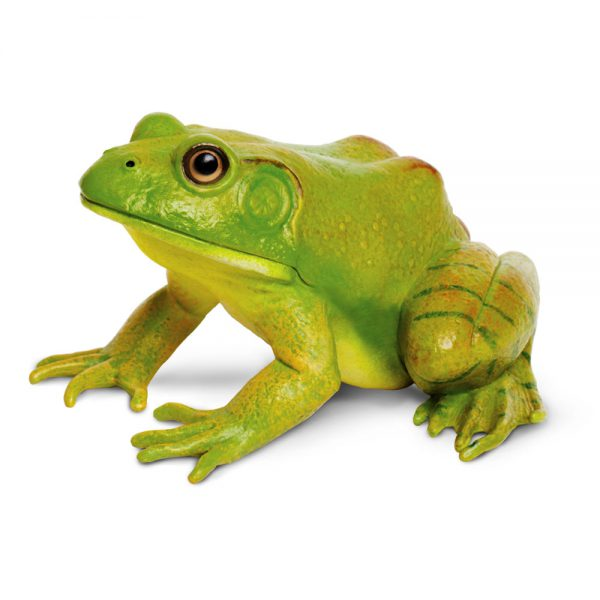 צפרדע שור אמריקאית