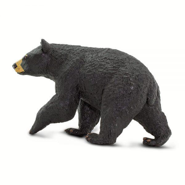 דוב שחור