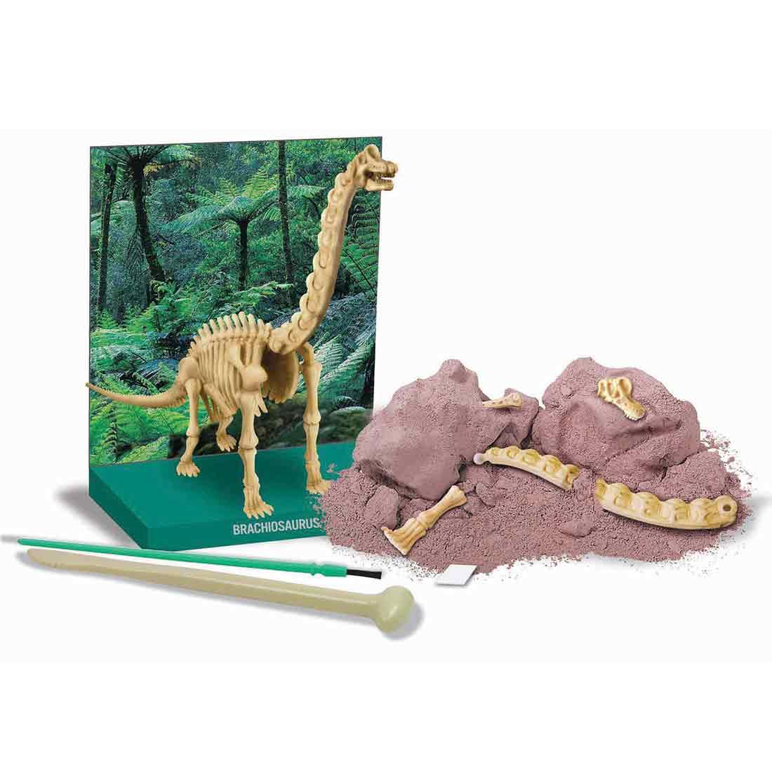 חפירת שלד דינוזאור ברכיוזאורוס תכולה