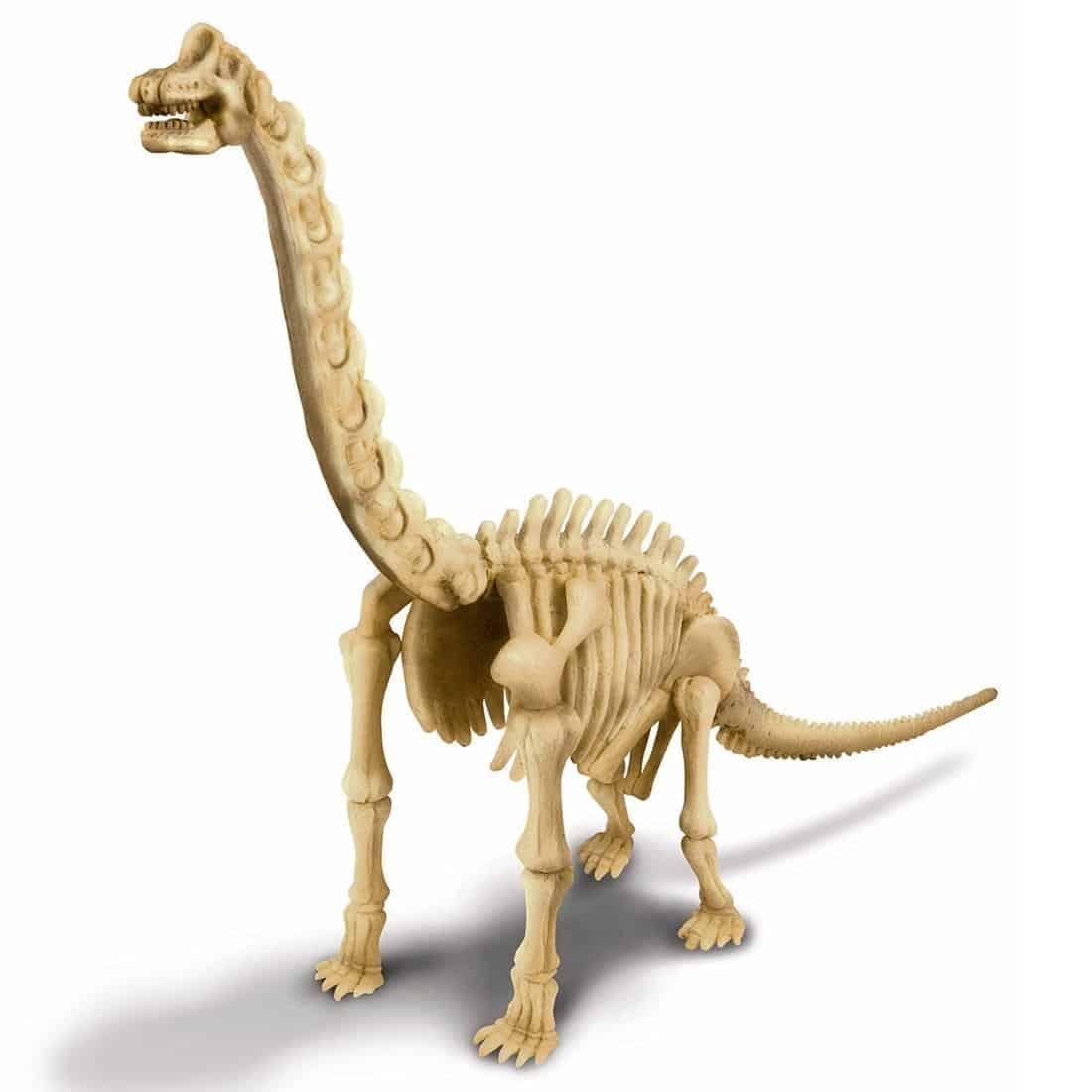 חפירת שלד דינוזאור ברכיוזאורוס מורכב