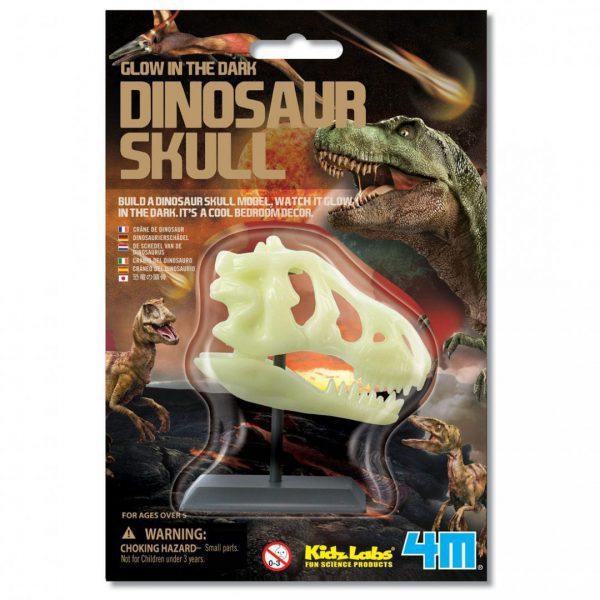 גולגולת דינוזאור זוהרת בחושך