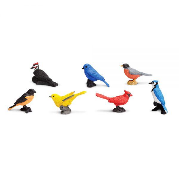 ציפורים מהחצר
