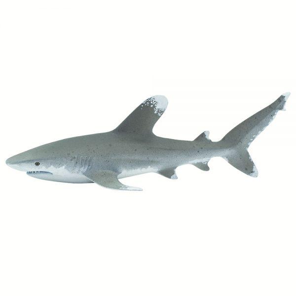 כריש ארך-גף