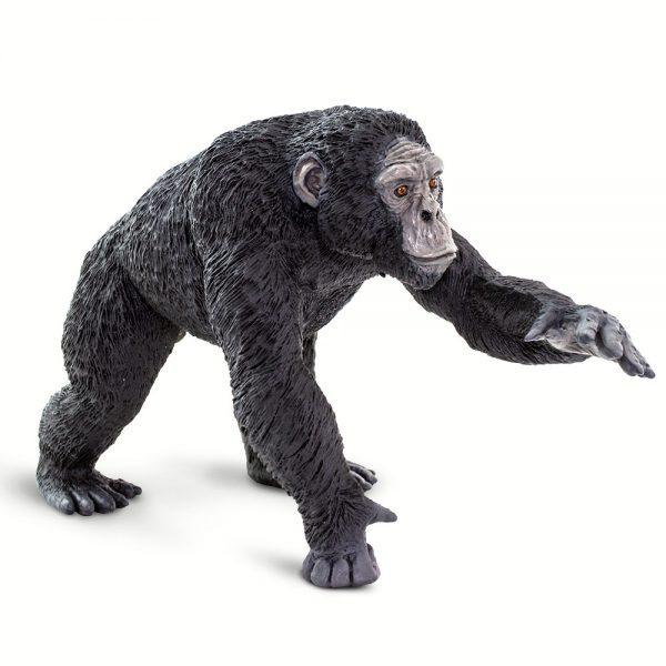 שימפנזההסדרה הגדולה