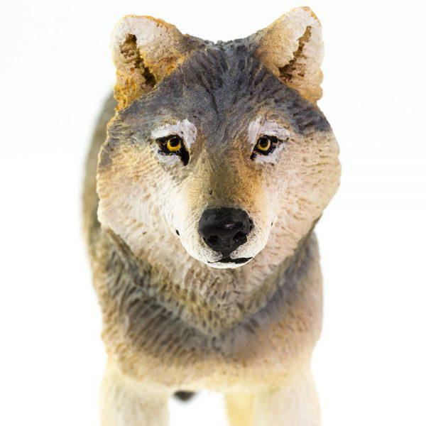 זאב אפור