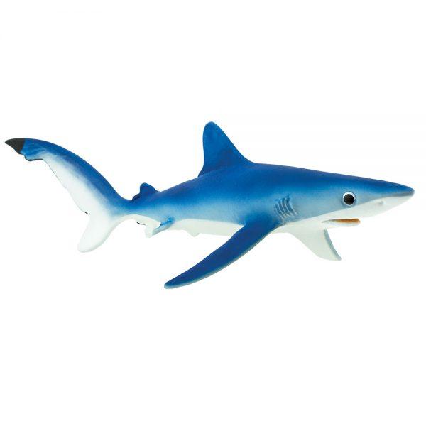 כריש כחול