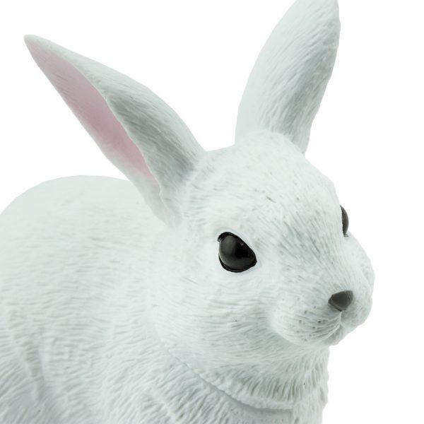 ארנב לבן