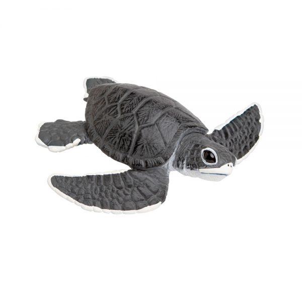 צאצא של צב ים (חדש)